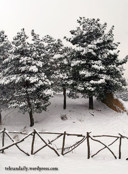 Snow in Lavizan Hills