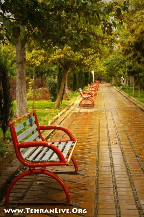 Autumn Rain and Empty Benchs