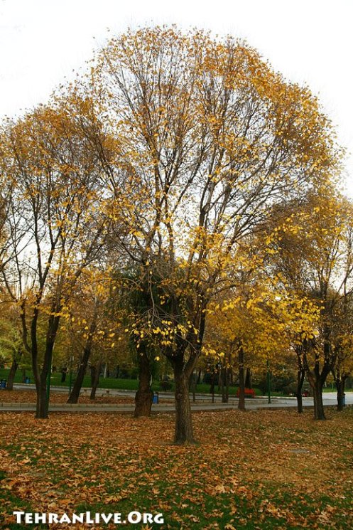 Mellat Park under Yellow Folios