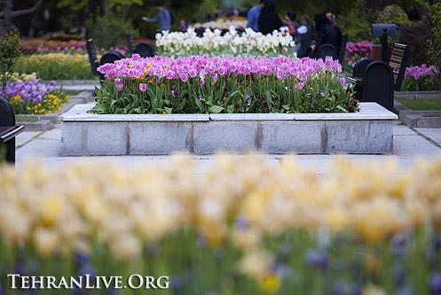 tulips_mellat_park_10