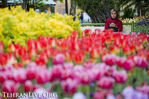 tulips_mellat_park_6