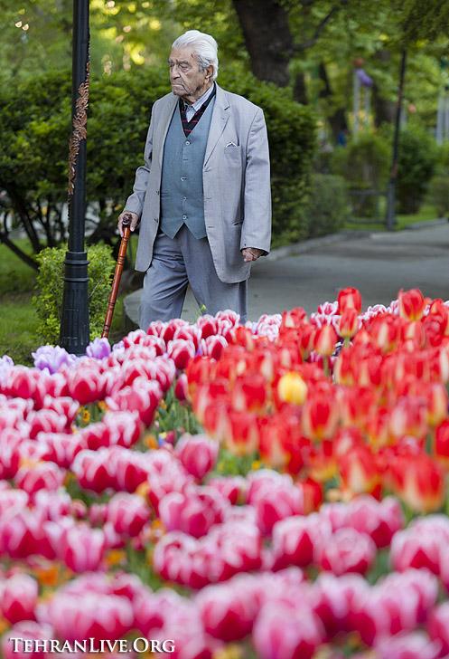 tulips_mellat_park_7
