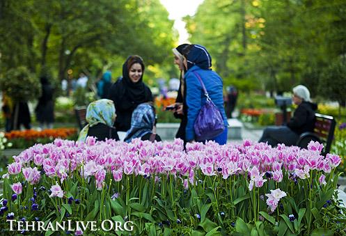 tulips_mellat_park_8