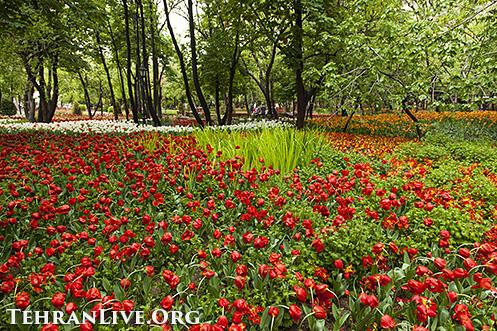 iranian_garden_tulips_10