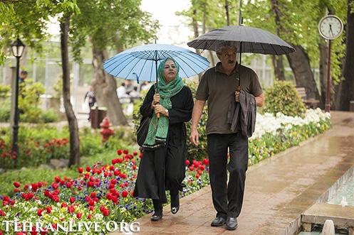 iranian_garden_tulips_12