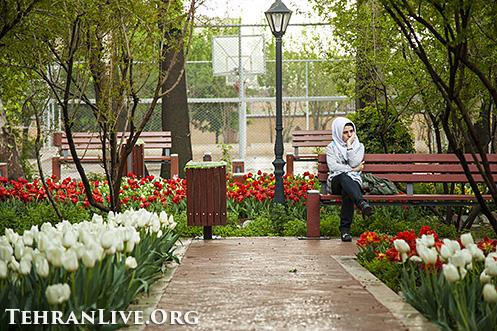 iranian_garden_tulips_2