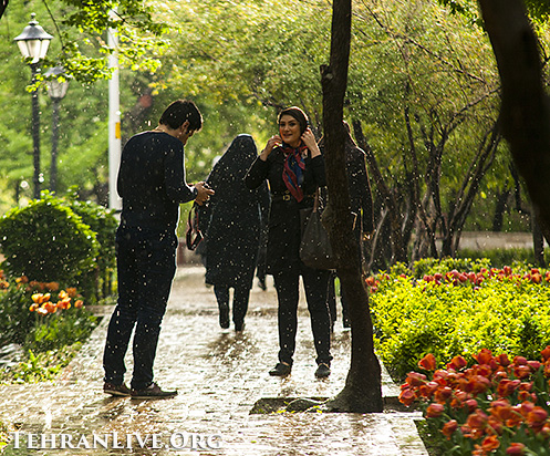 iranian_garden_tulips_3