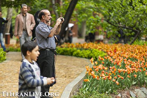 iranian_garden_tulips_4