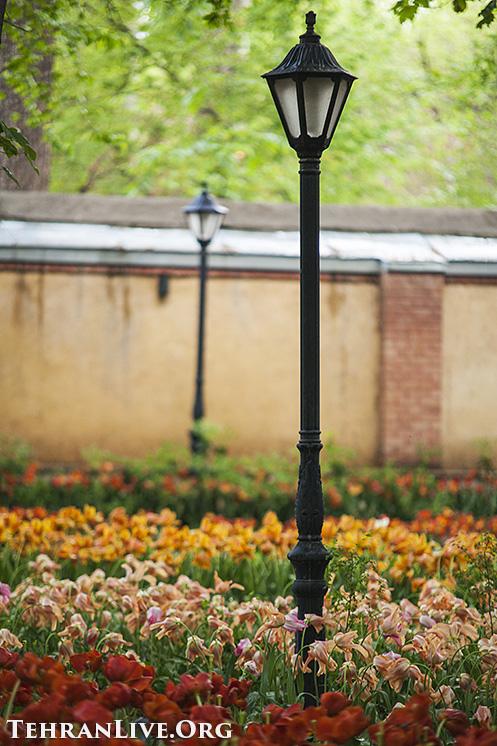 iranian_garden_tulips_6