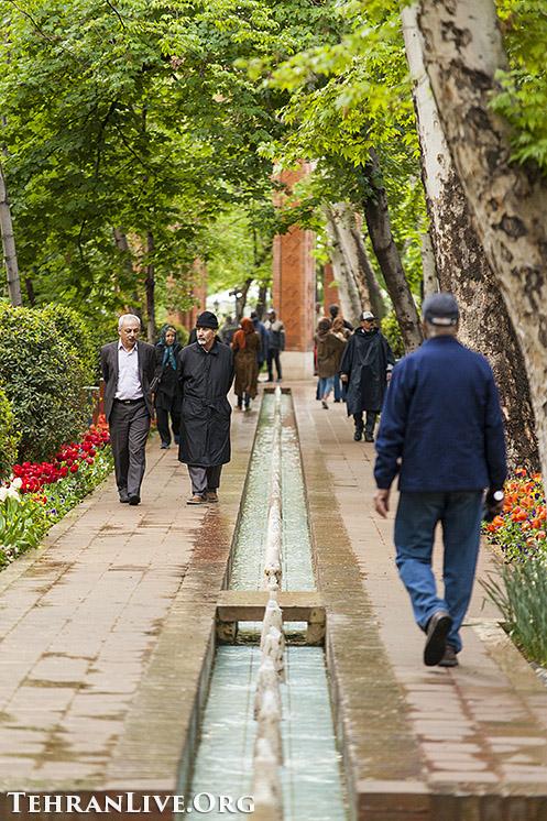 iranian_garden_tulips_7