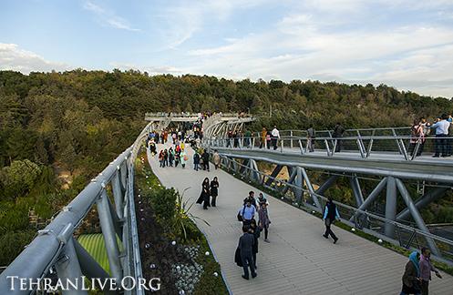 nature_bridge_4