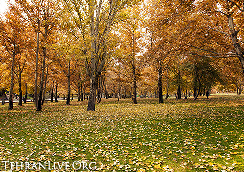 fall_in_tehran_2014_4